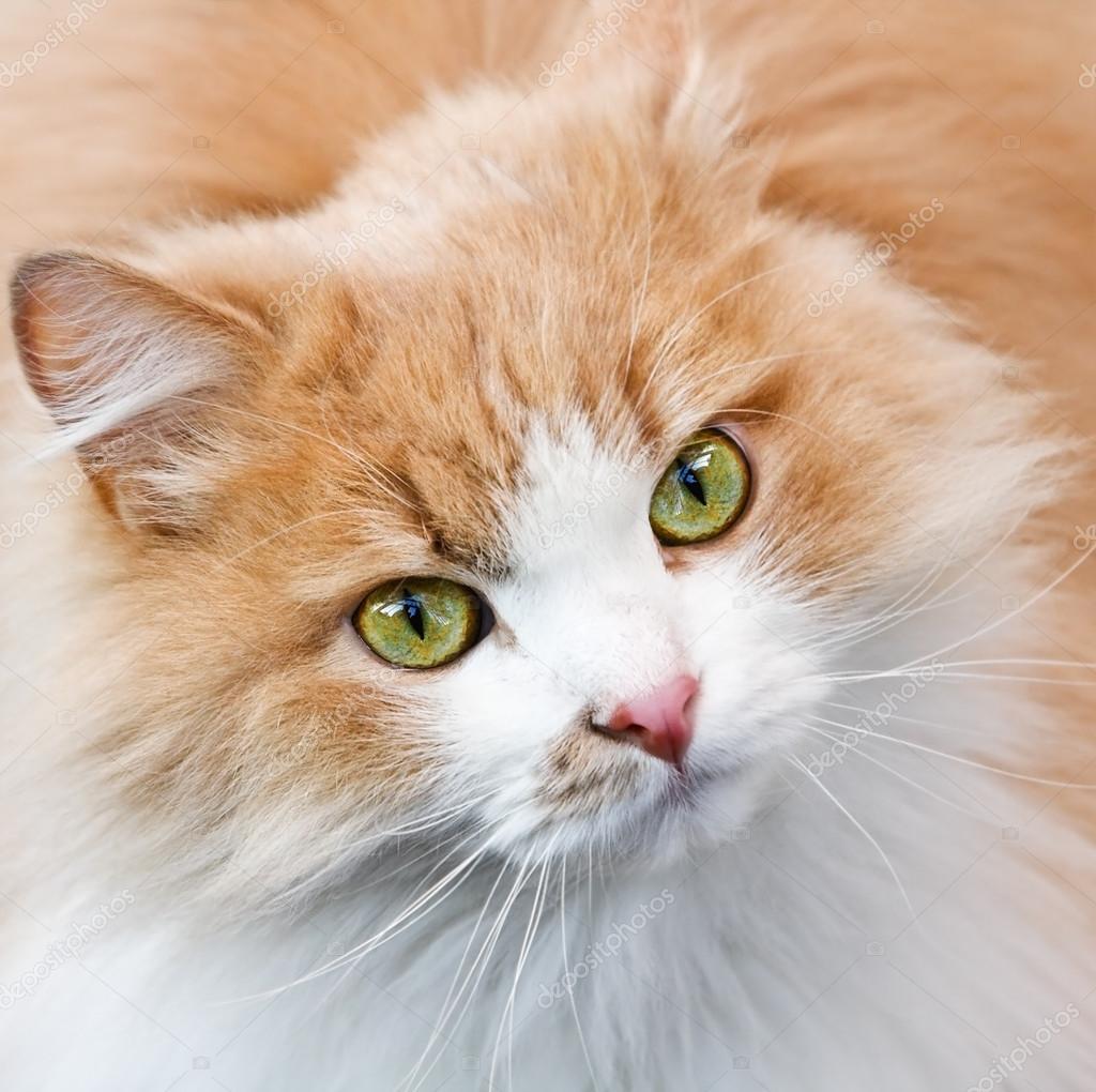 katt med rinnande ögon