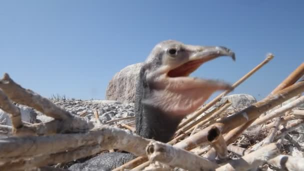 Vogelbaby eines Kormorans