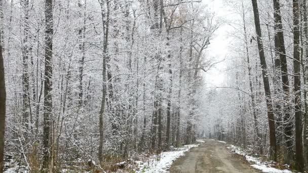 Wald nach dem ersten Schnee