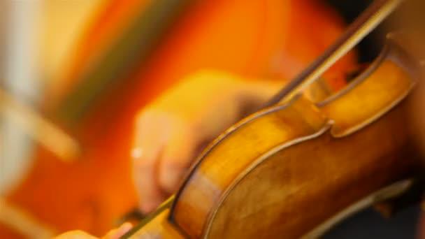 housle v orchestru