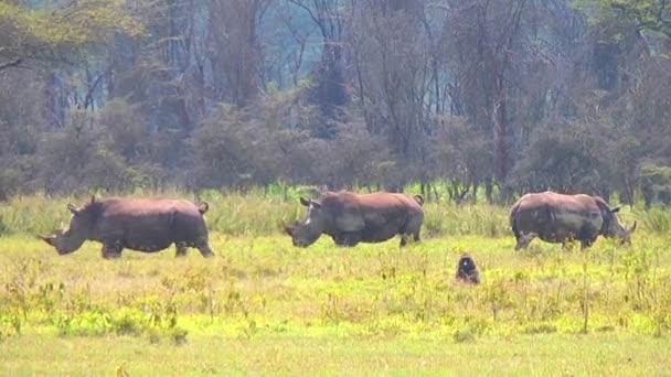 Group Of  Rhino In African Safari Park