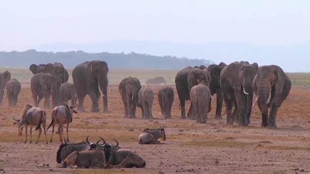 közeli kép: egy nagy csorda elefánt jön öntözés.