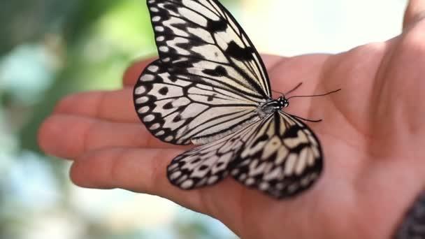 motýl na lidská ruka