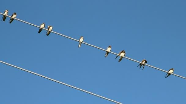 Vögel auf einem elektrischen Draht über blauer Himmel — Stockvideo ...