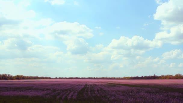 louka s levandulí trávy a modrou oblohu s mraky