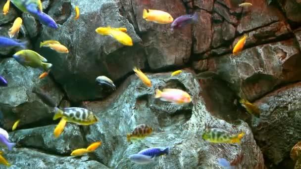 tropické ryby na korálovém útesu