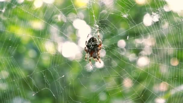 pavouk na webu v lese