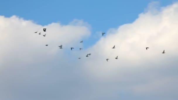 repülő madarak