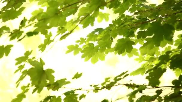 čerstvé zelené listy