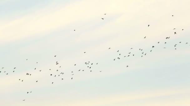 videa ptáků
