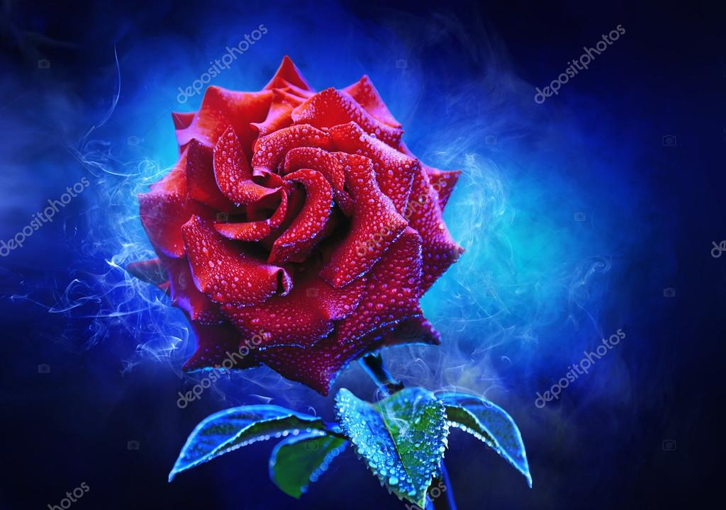 Mystical red rose