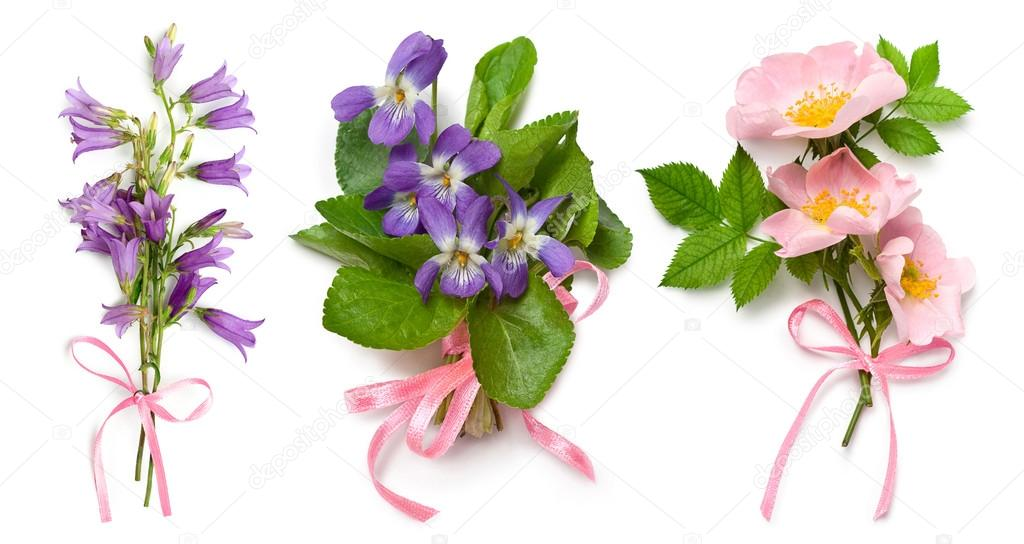 Bouquet of wild violets, dog rose and bell flowers — Stock Photo ...