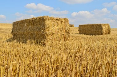 Straw bale drying in the sun