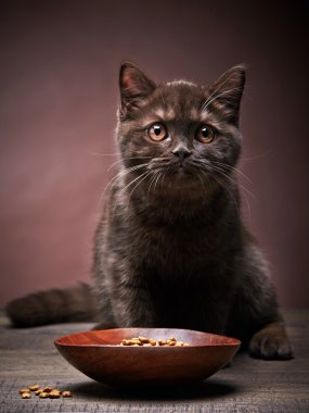 brown kitten and cat food