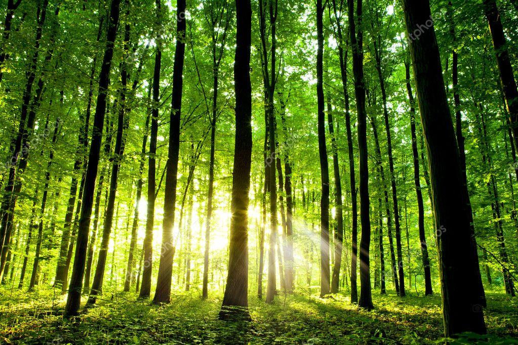 Фотообои Красивый зеленый лес