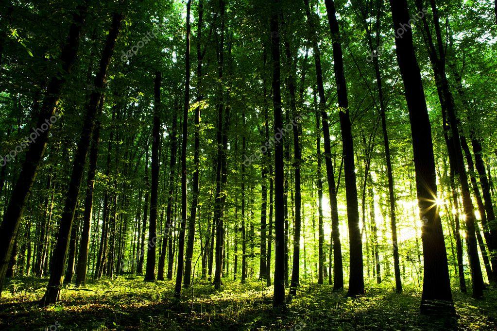 Фотообои Beautiful green forest