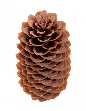 Variation on a theme of fir-cone