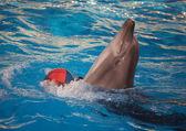 delfín s míčem