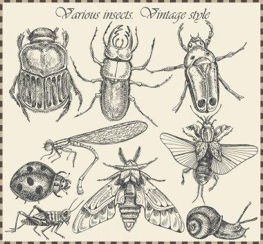 """Картина, постер, плакат, фотообои """"векторные насекомые в винтажном стиле """", артикул 16240595"""