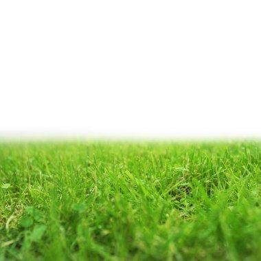 Fresh green grass stock vector
