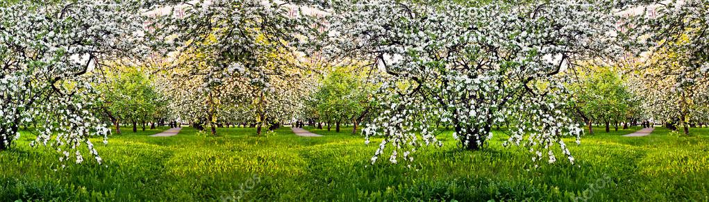 Beautiful blooming of apple and fruit trees