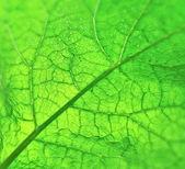 zavřít zelenou listovou texturu