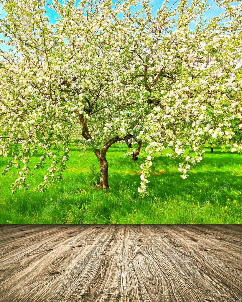 Beautiful blooming of decorative white apple and fruit trees over ...
