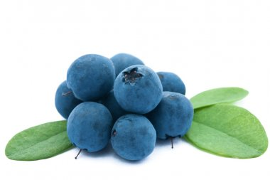 fresh blueberries isolated