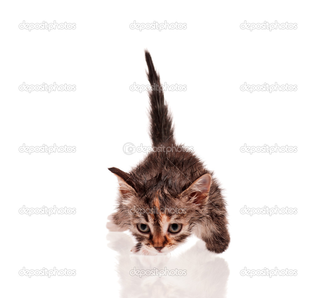 mokré pussys obrázky