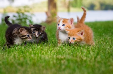 Four little kittens in garden