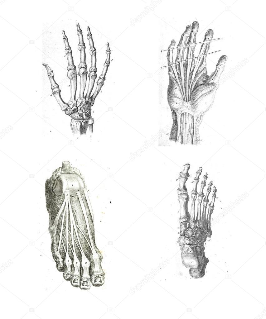 4 puntos de vista de la mano y el pie — Fotos de Stock © cascoly ...