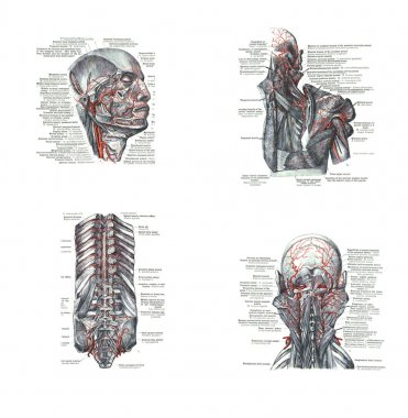 4 views of the head, back and spine,