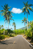 Photo Nice asphalt road with palm trees