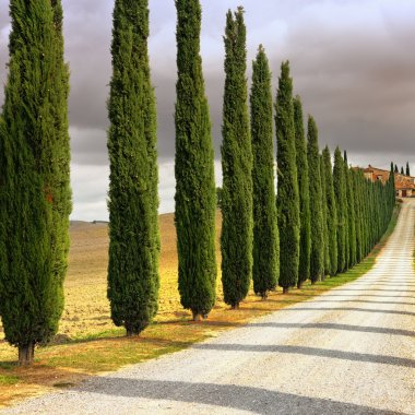 Idyllic Tuscan landscape with cypress alley at sunset near Pienza, Vall d'Orcia Italy, Europe. Cross processing from RAW file stock vector