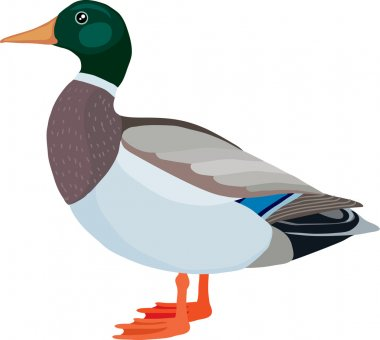 Duck made in the technique of vector