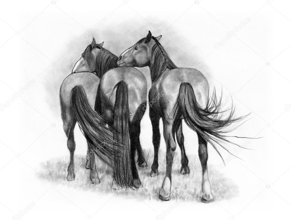Pencil Drawing Of Three Horses From Rear Stock Photo