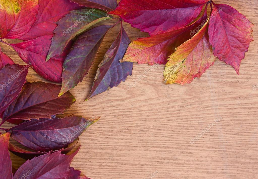 background from the autumn leaves of wild grapes