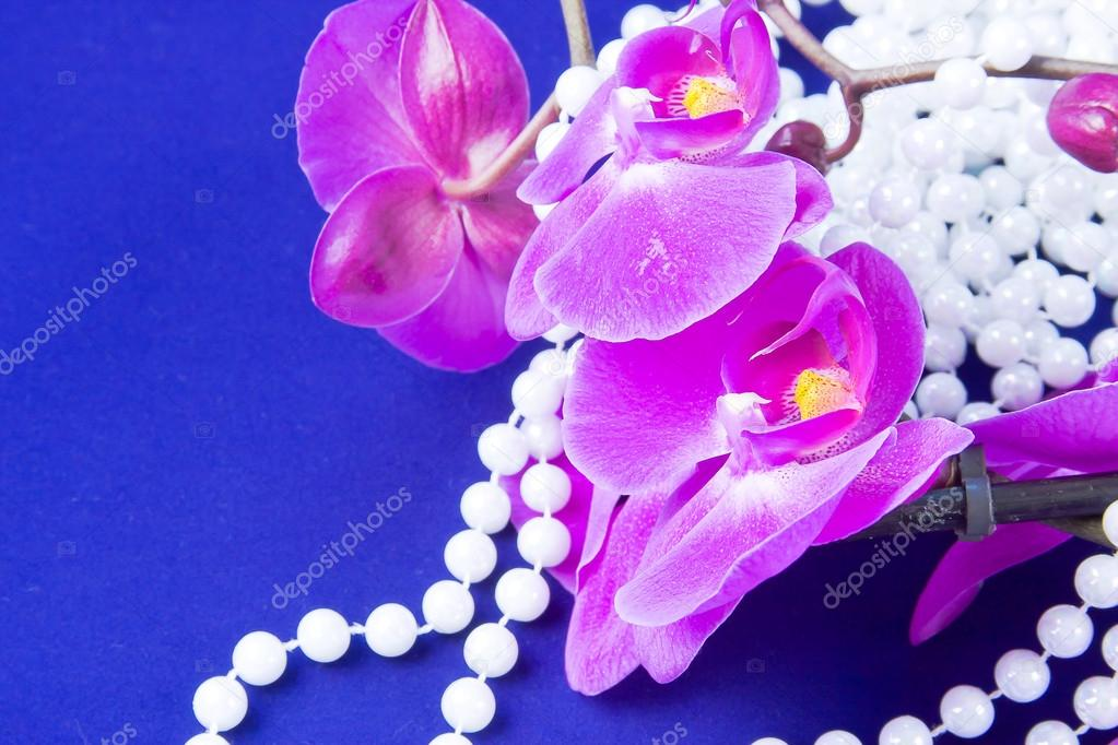 flowers of pink orchid and beads from white pearls on a blue ba