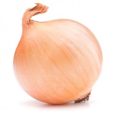 gold onion bulb