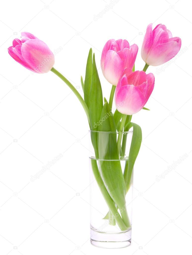 rosa tulpen blumenstrau in der vase die isoliert auf wei em hintergrund stockfoto natika. Black Bedroom Furniture Sets. Home Design Ideas