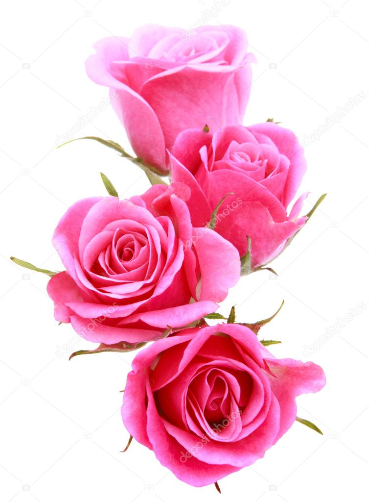 Pink rose flower bouquet