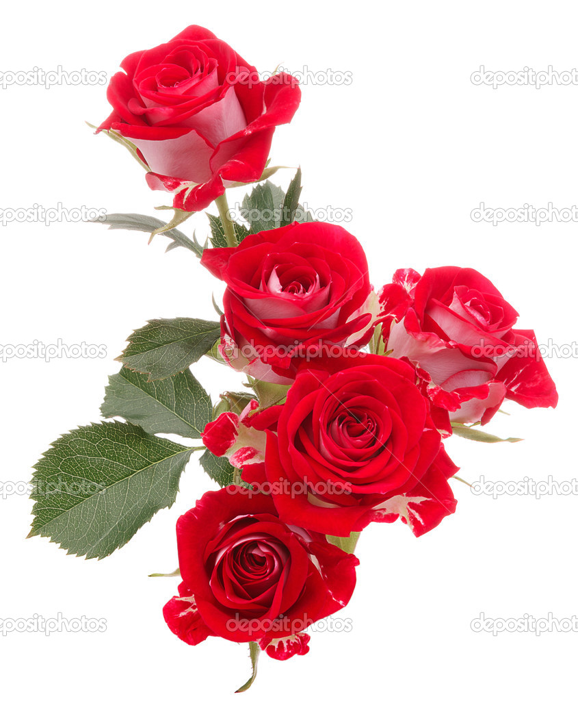 Red rose flower bouquet isolated on white background cutout — Stock ...
