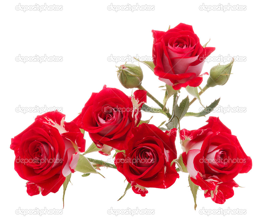 Bouquet De Fleur Rose Rouge Isole Sur La Decoupe De Fond Blanc