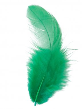 Green feather isolated on white background cutout stock vector