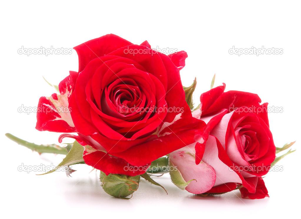 Bouquet De Fleurs Rose Rouge Photographie Natika C 49197777