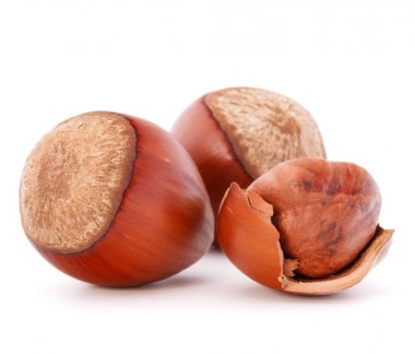 Hazelnuts or filbert nuts