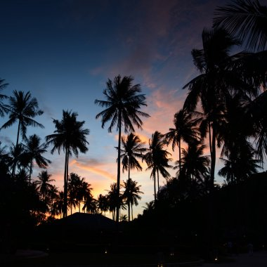Palms at sunset at thailand resort