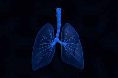 Human lungs in color background