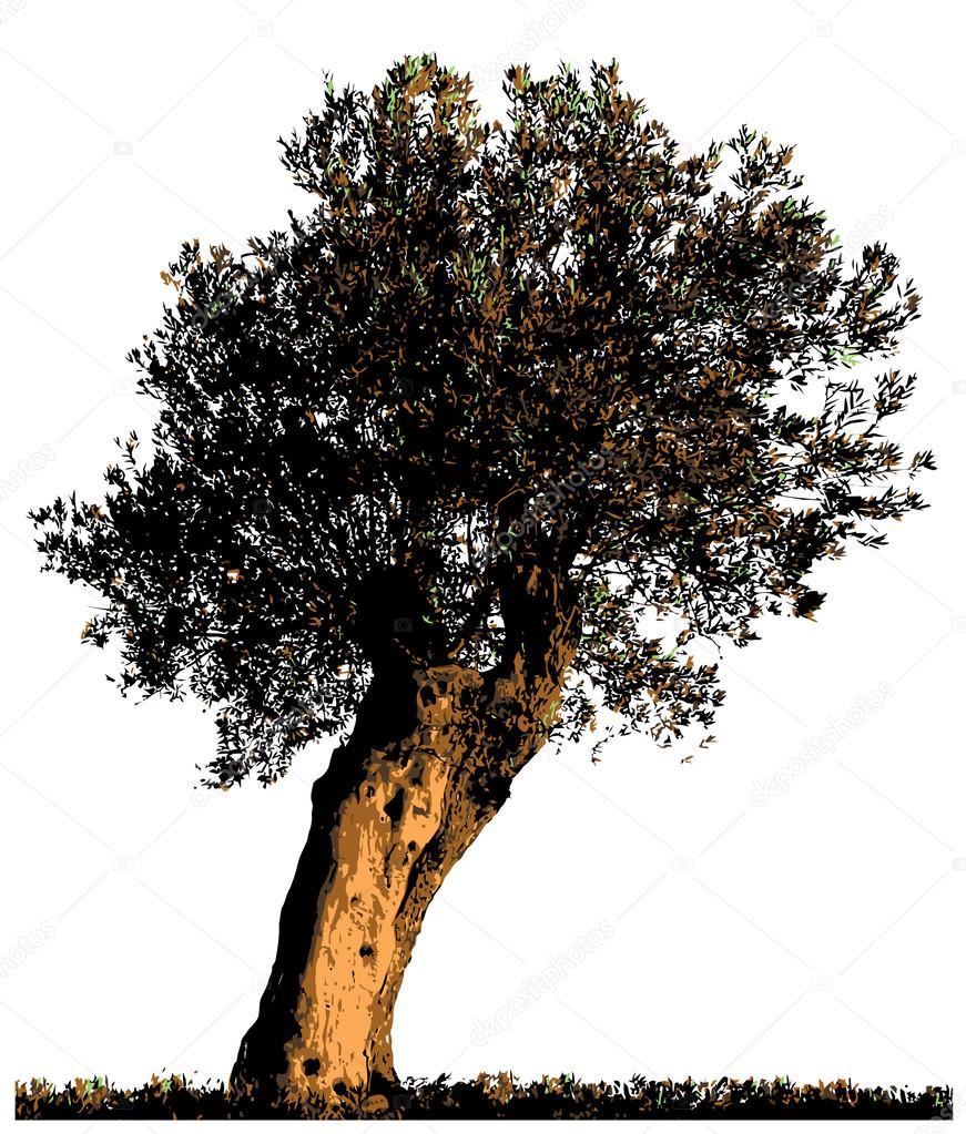 Sagoma di olivo vettoriali stock iralu1 45973345 for Albero ulivo vettoriale