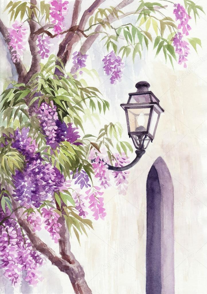 Wisteria and lantern